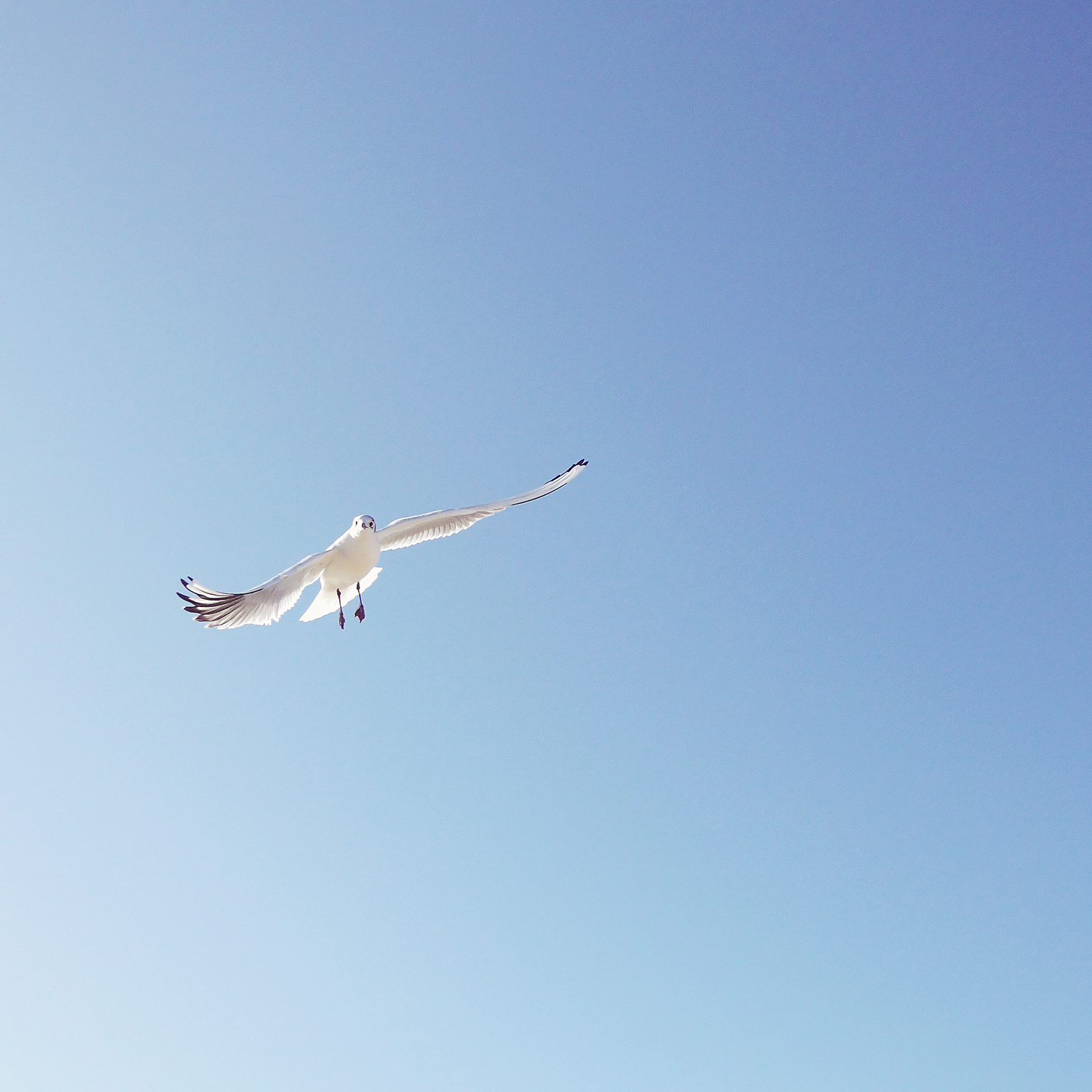 The Benefits of Internet-Free Days | Photo of a blue sky and a seagull | natashadenness.co.uk