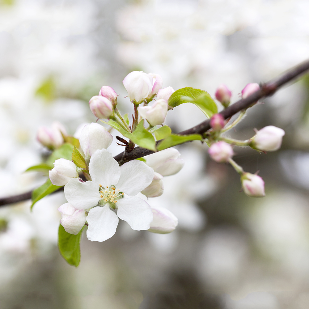 Practical Tips to Help You Reach Your Goals | natashadenness.co.uk | (photo of blossom)
