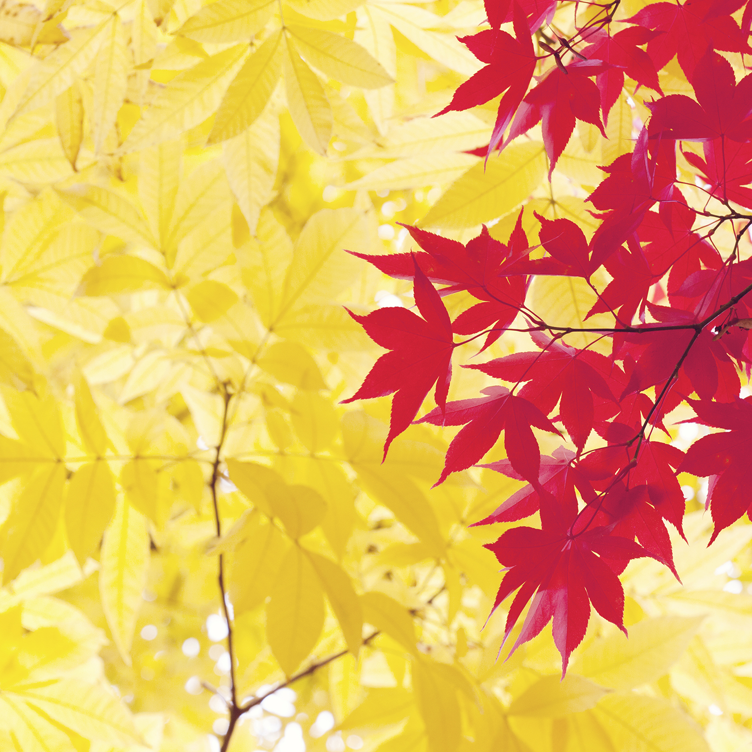Six Simple and Uplifting Ways to Find Your Creative Flow | Natasha Denness Coaching | natashadenness.co.uk (Photo of autumn leaves)