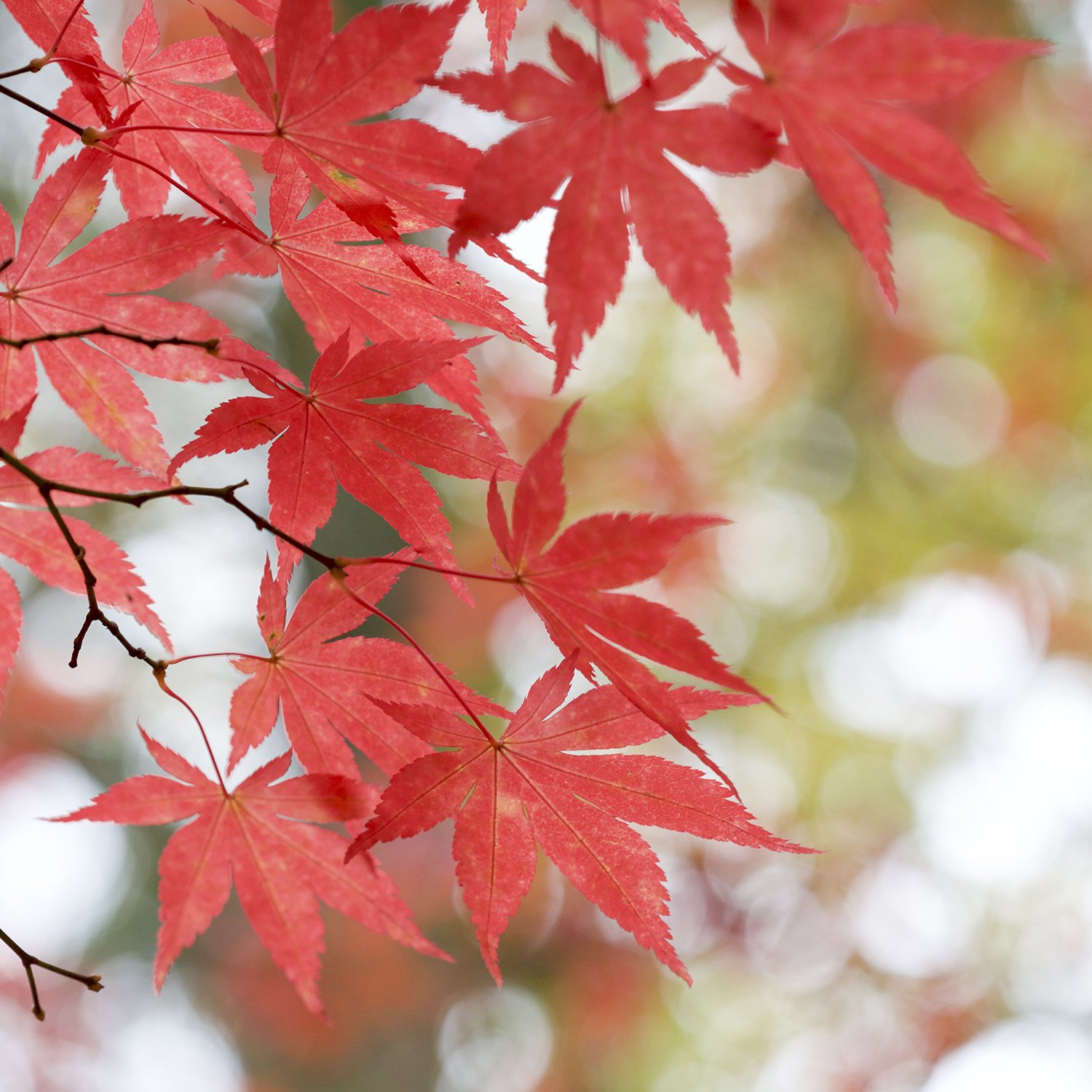 Six Simple and Uplifting Ways to Find Your Creative Flow | natashadenness.co.uk (photo of autumn leaves)