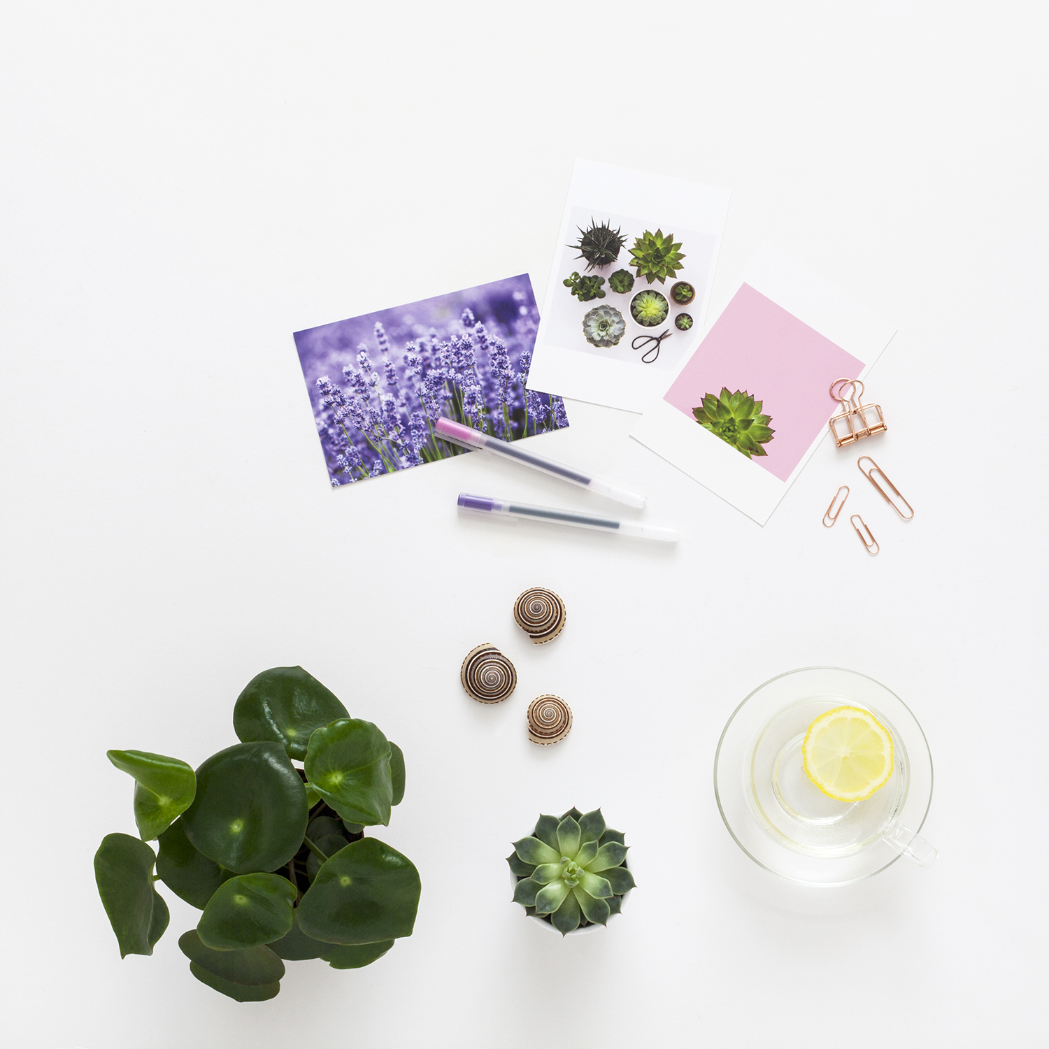 12 Insightful Questions to Help You Plan Your Year | Photo of some postcards and a plant | natashadenness.co.uk