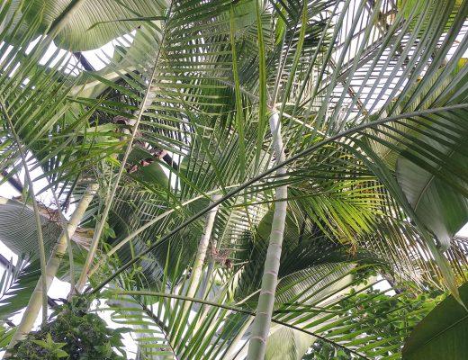 Photo: botanic garden greenhouse