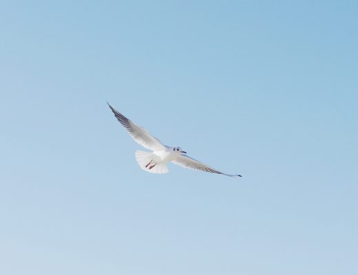 Setting my Intention for the New Year with a Word | Photo of seagulls and a blue sky | natashadenness.co.uk