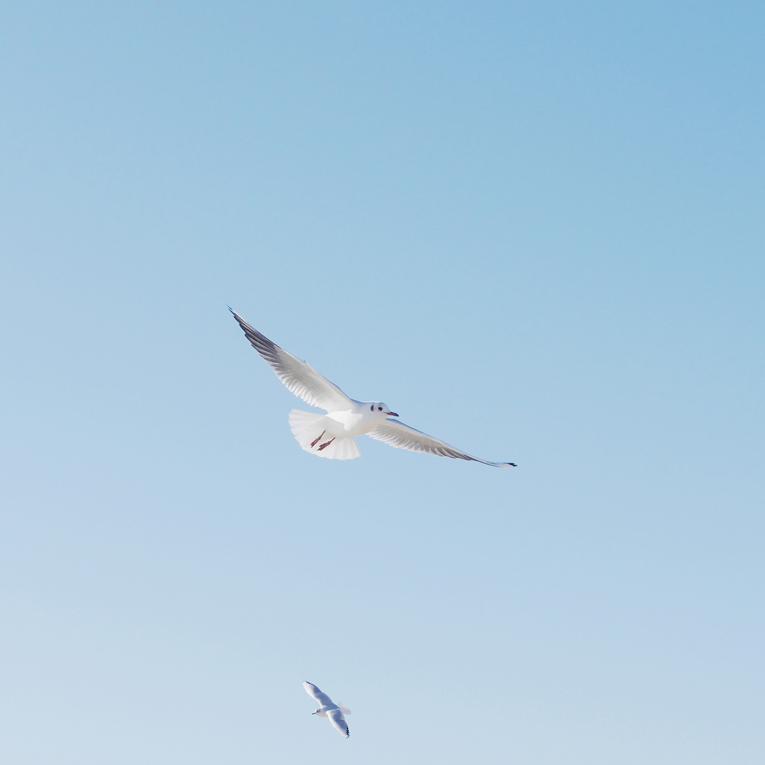 Setting my Intention for the New Year with a Word | Natasha Denness Coaching | natashadenness.co.uk (Photo of seagulls and a blue sky)