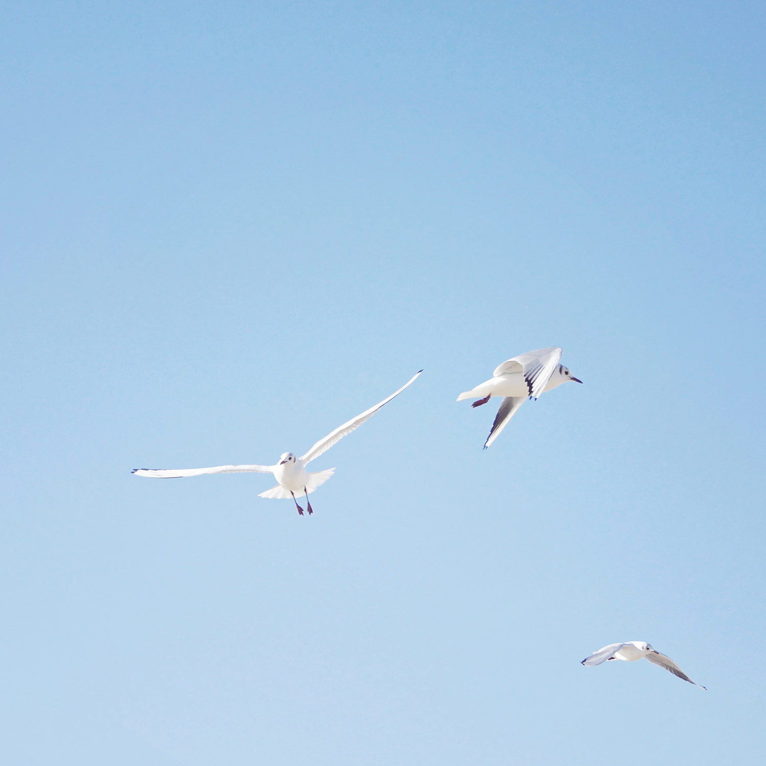 Finding Peace and Serenity in Turbulent Times | Natasha Denness Coaching (photo of seagulls)
