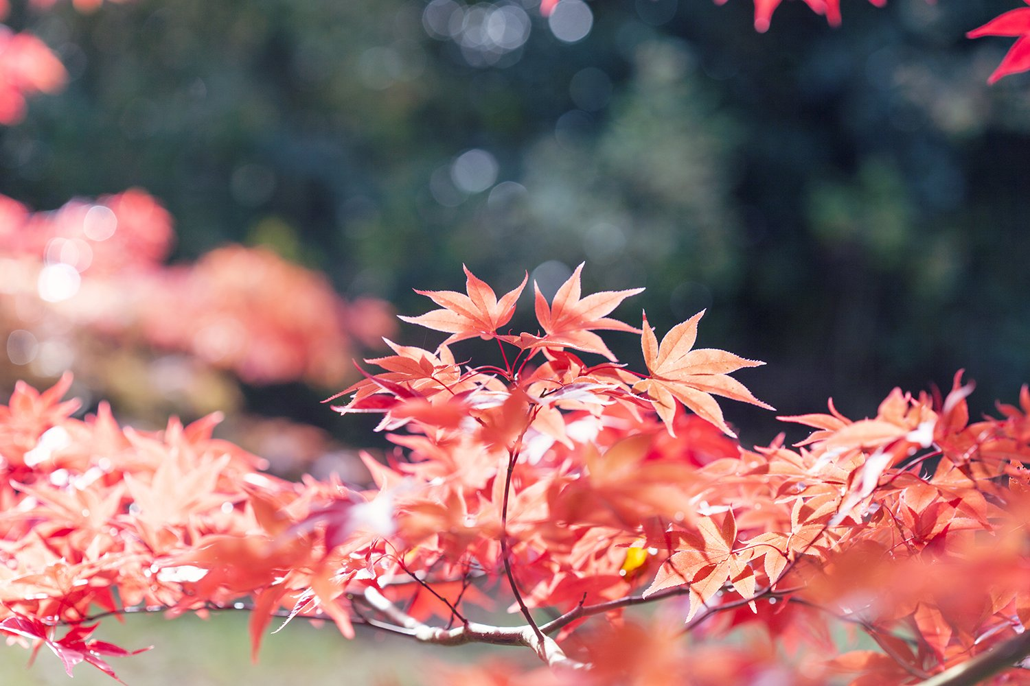 Five Ways to Embrace a Cosy Autumn and Winter at Home (image of autumn leaves)