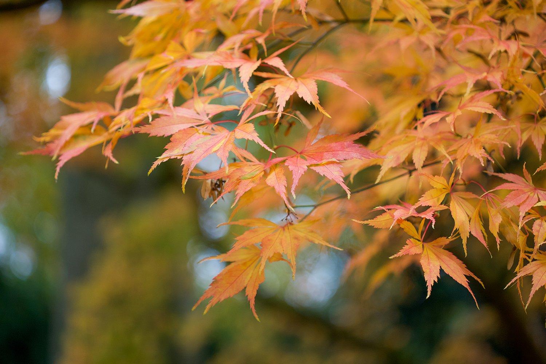 Nurturing and Uplifting Autumn Intentions   Natasha Denness Coaching (image of an autumnal nature scene)